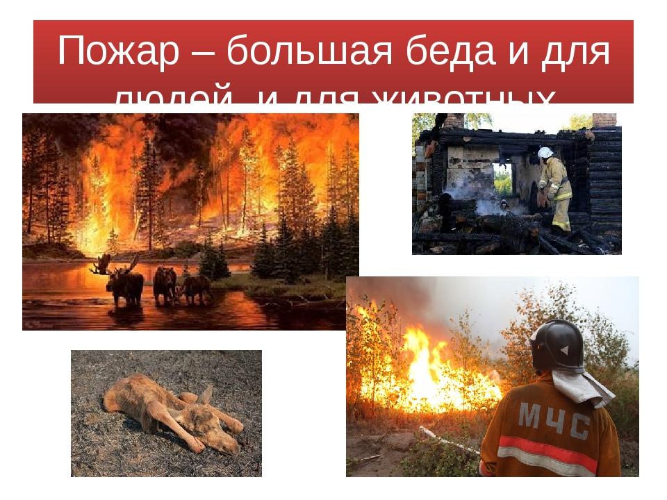 Пожар – большая беда и для людей, и для животных