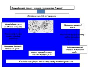 Коацерватная капля – сгусток органических веществ Характерные для неё процесс