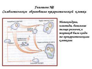 Гипотеза №2 Симбиотическое образование эукариотической клетки Митохондрии, п