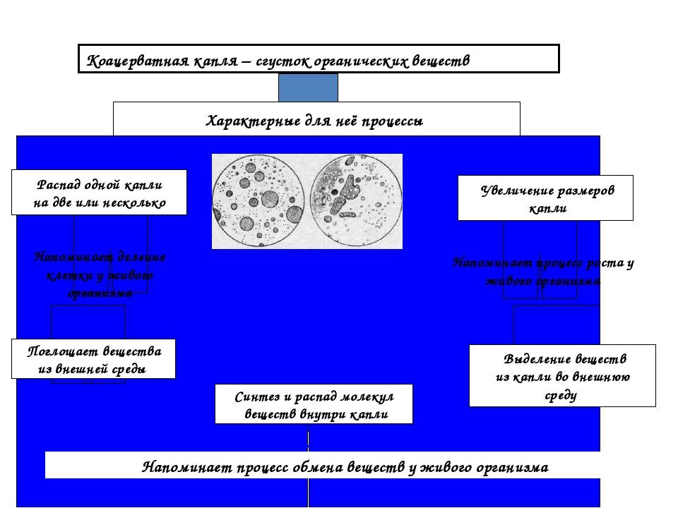 Коацерватная капля – сгусток органических веществ Характерные для неё процесс...