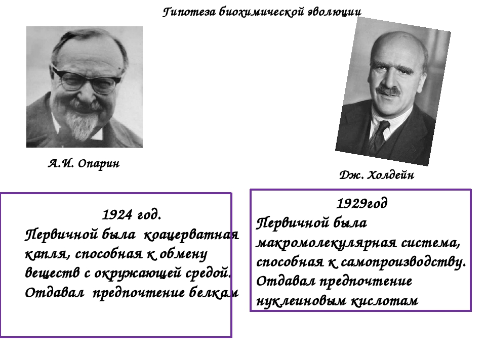 1929год Первичной была макромолекулярная система, способная к самопроизводств...
