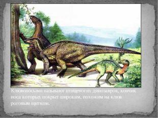 Клювоносыми называют птиценогих динозавров, кончик носа которых покрыт широки