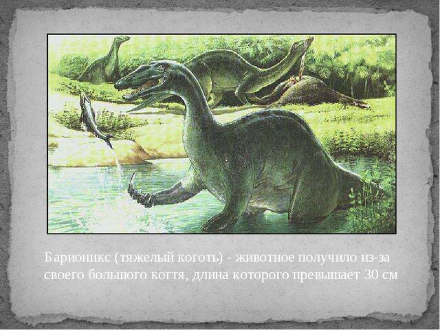 Барионикс (тяжелый коготь) - животное получило из-за своего большого когтя, д...