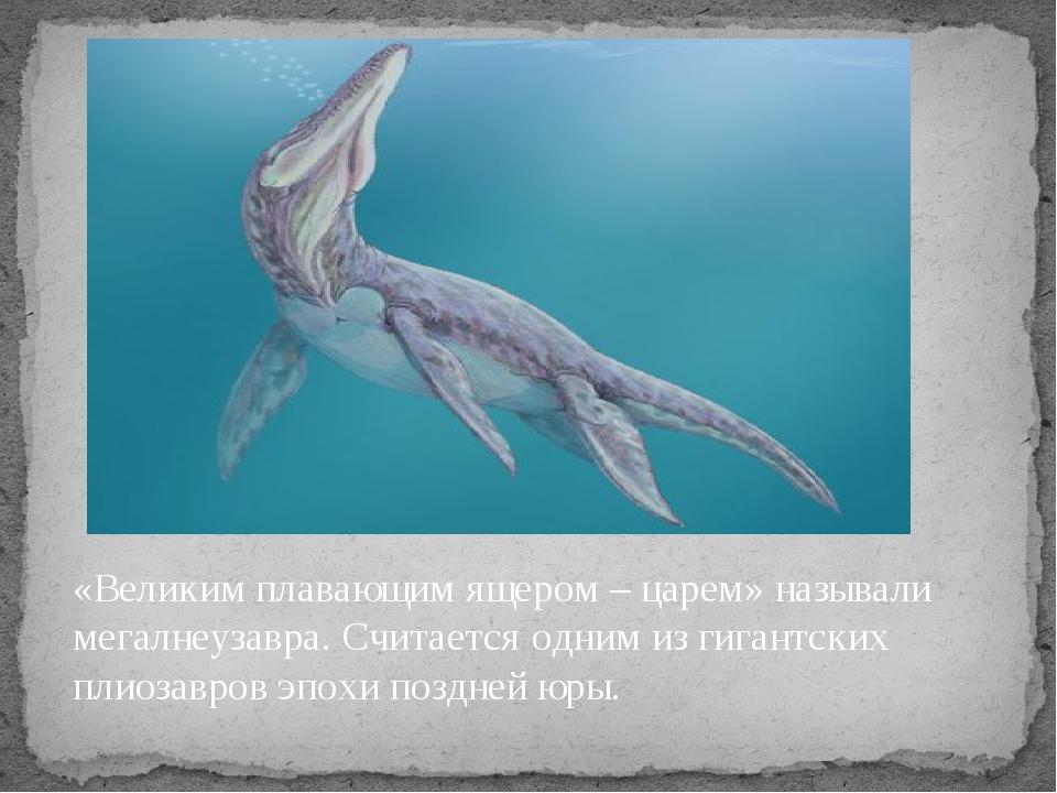«Великим плавающим ящером – царем» называли мегалнеузавра. Считается одним из...