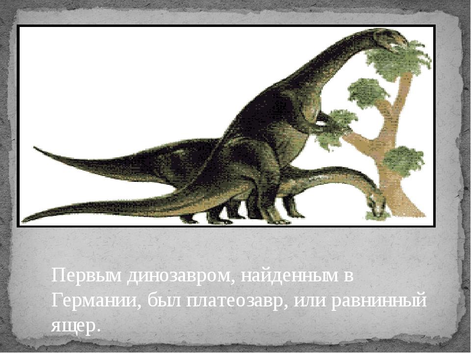Первым динозавром, найденным в Германии, был платеозавр, или равнинный ящер.
