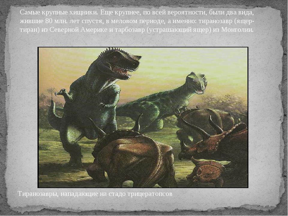 Тиранозавры, нападающие на стадо трицератопсов Самые крупные хищники. Еще кру...