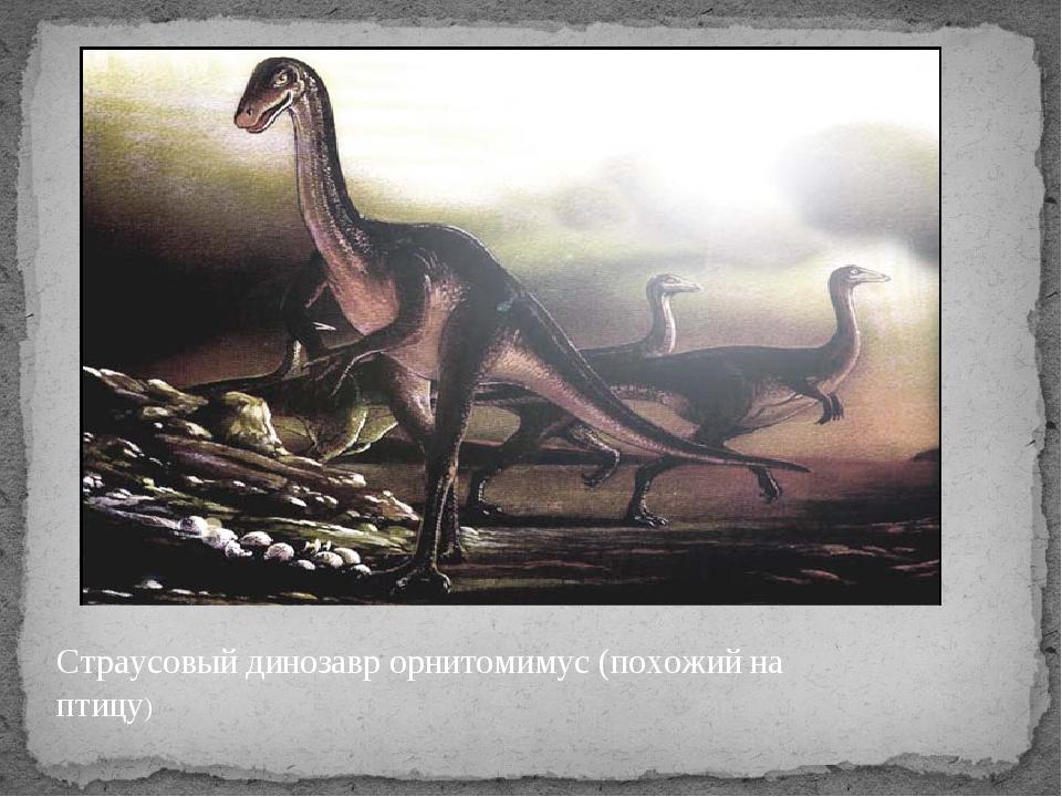 Страусовый динозавр орнитомимус (похожий на птицу)