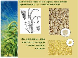 На Востоке (а когда-то и в Европе) зерна ячменя перемалывали в муку и пекли и