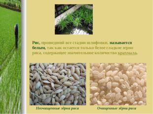 Рис, прошедший все стадии шлифовки, называется белым, так как остается только
