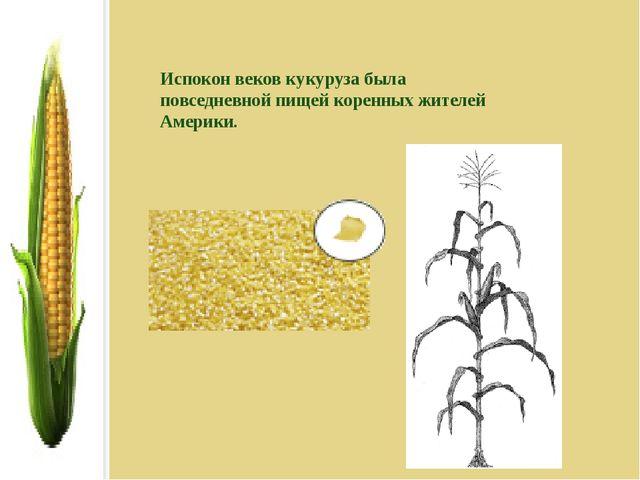 Испокон веков кукуруза была повседневной пищей коренных жителей Америки.