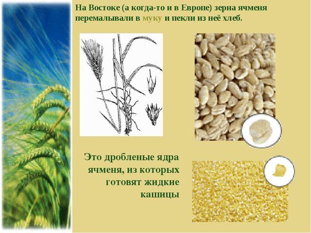 На Востоке (а когда-то и в Европе) зерна ячменя перемалывали в муку и пекли и...