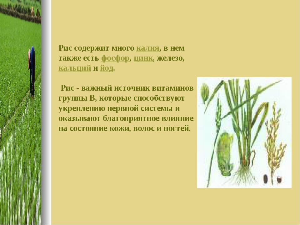Рис содержит много калия, в нем также есть фосфор, цинк, железо, кальций и йо...