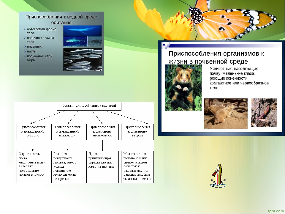 Работа с тестами помогают осуществлять познавательную учебную деятельность 1)...