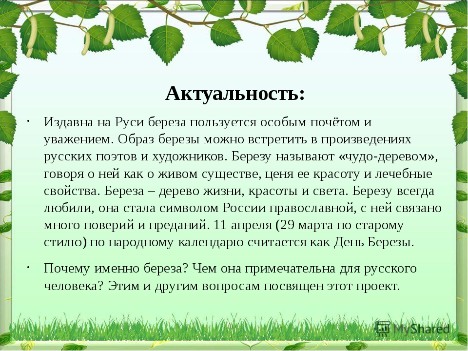 Олег Шестинский Издавна на Руси береза пользуется особым почётом и уважением....