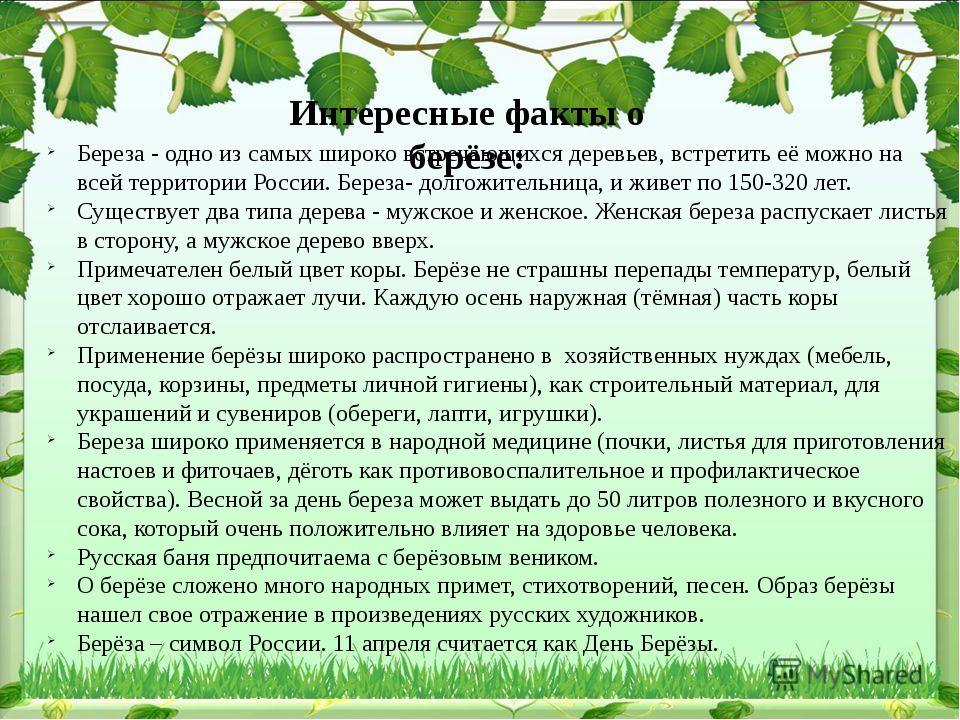 Интересные факты о берёзе: Береза - одно из самых широко встречающихся деревь...