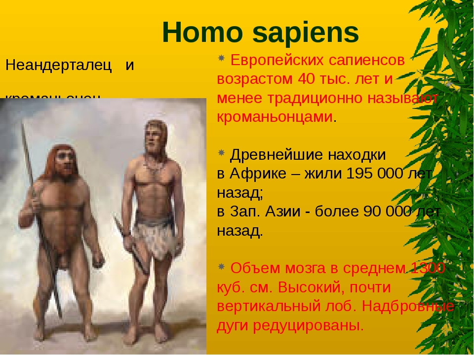 the homo sapiens essay Human evolution evolution is the complexity of processes by which living organisms established on earth and have been expanded and modified through theorized changes in form and function human evolution is the biological and cultural development of the species homo sapiens sapiens, or human beings.
