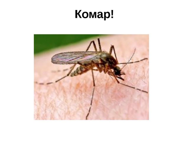 Комар!
