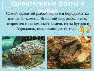 Удивительные факты о рыбах Самой ядовитой рыбой является бородавчатка или ры
