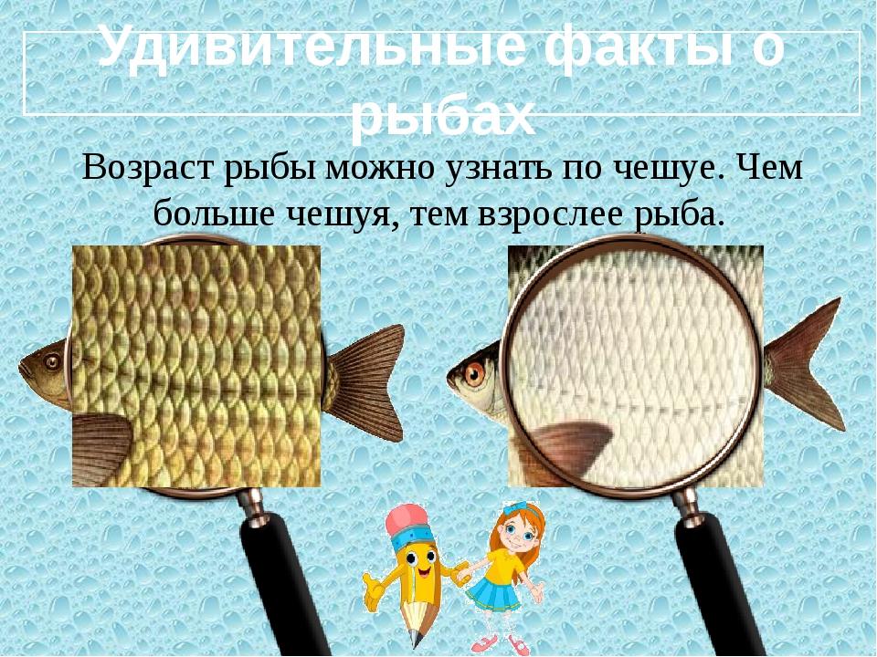 Удивительные факты о рыбах Возраст рыбы можно узнать по чешуе. Чем больше че...