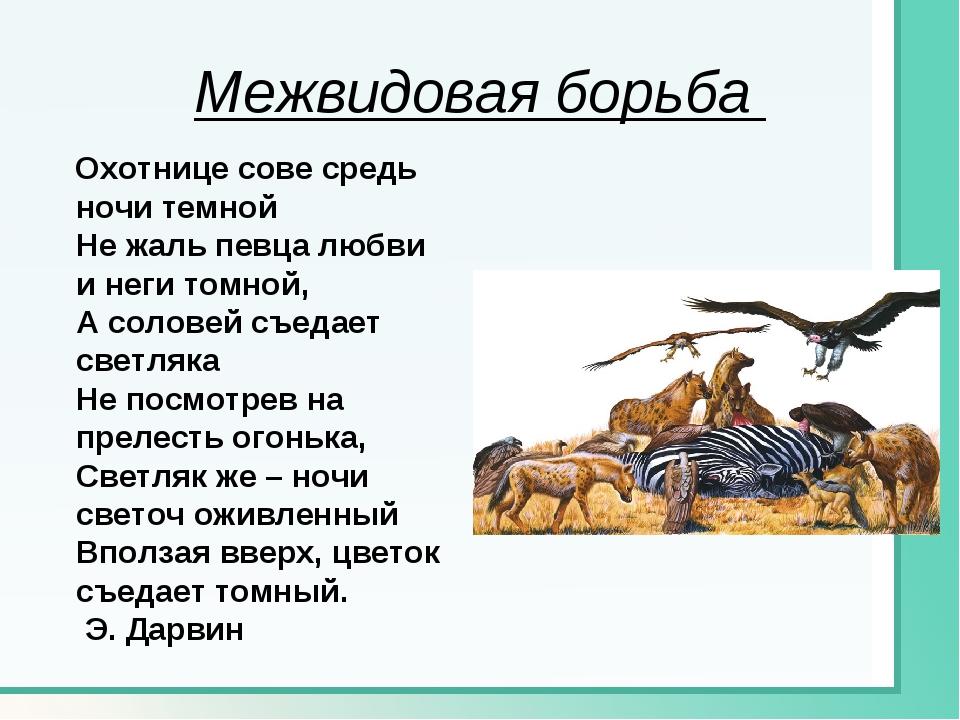 Межвидовая борьба Охотнице сове средь ночи темной Не жаль певца любви и неги...