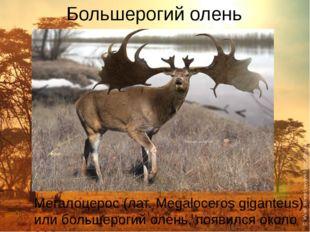 Большерогий олень Мегалоцерос (лат. Megaloceros giganteus) или большерогий ол