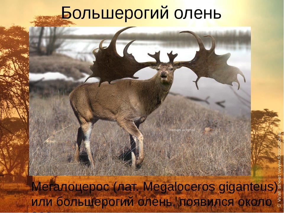 Большерогий олень Мегалоцерос (лат. Megaloceros giganteus) или большерогий ол...