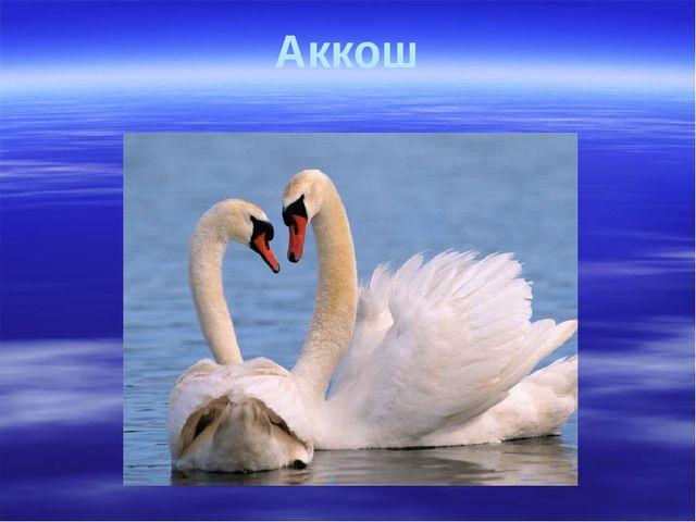 Аккош