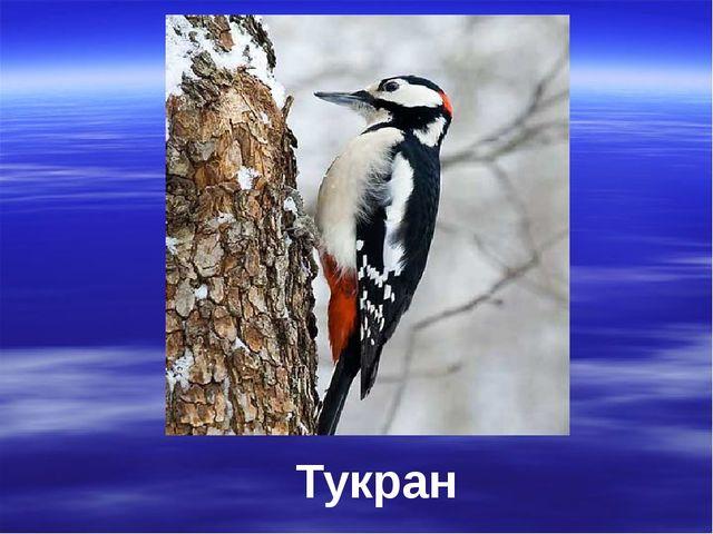 Тукран