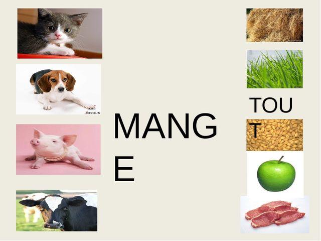 MANGE TOUT