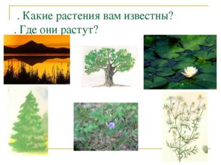 . Какие растения вам известны? . Где они растут?