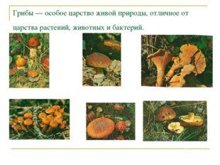 Грибы — особое царство живой природы, отличное от царства растений, животных