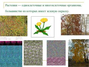 Растения — одноклеточные и многоклеточные организмы, большинство из которых и
