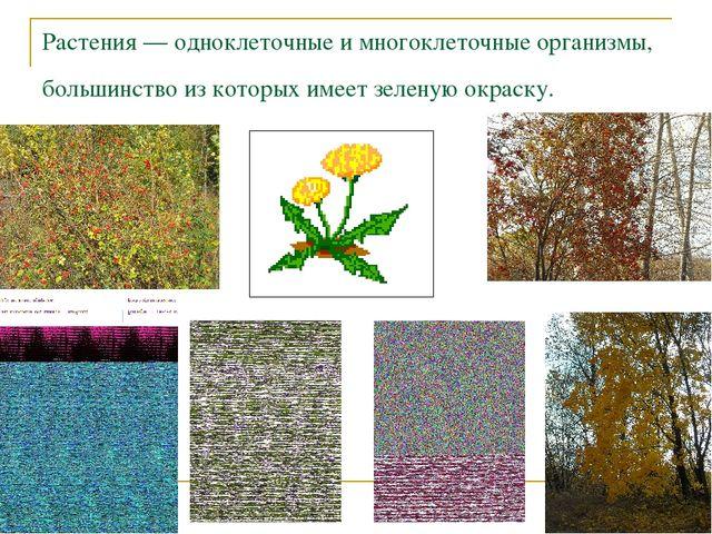 Растения — одноклеточные и многоклеточные организмы, большинство из которых и...