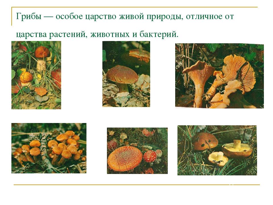Грибы — особое царство живой природы, отличное от царства растений, животных...