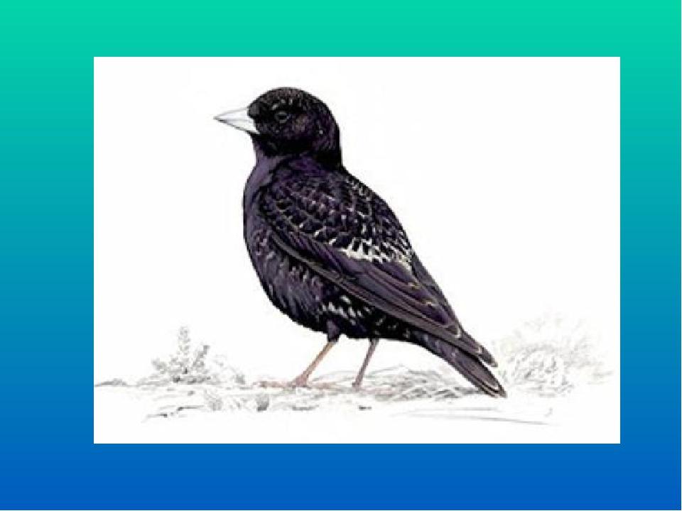 Це весняний ранній птах, називається він…