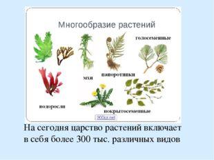 На сегодня царство растений включает в себя более 300 тыс. различных видов