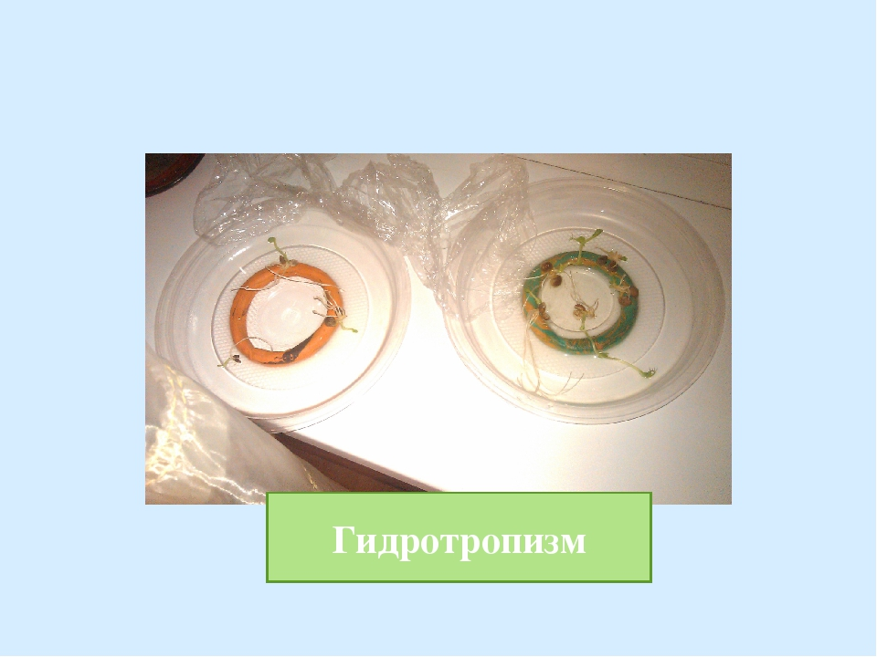 Гидротропизм