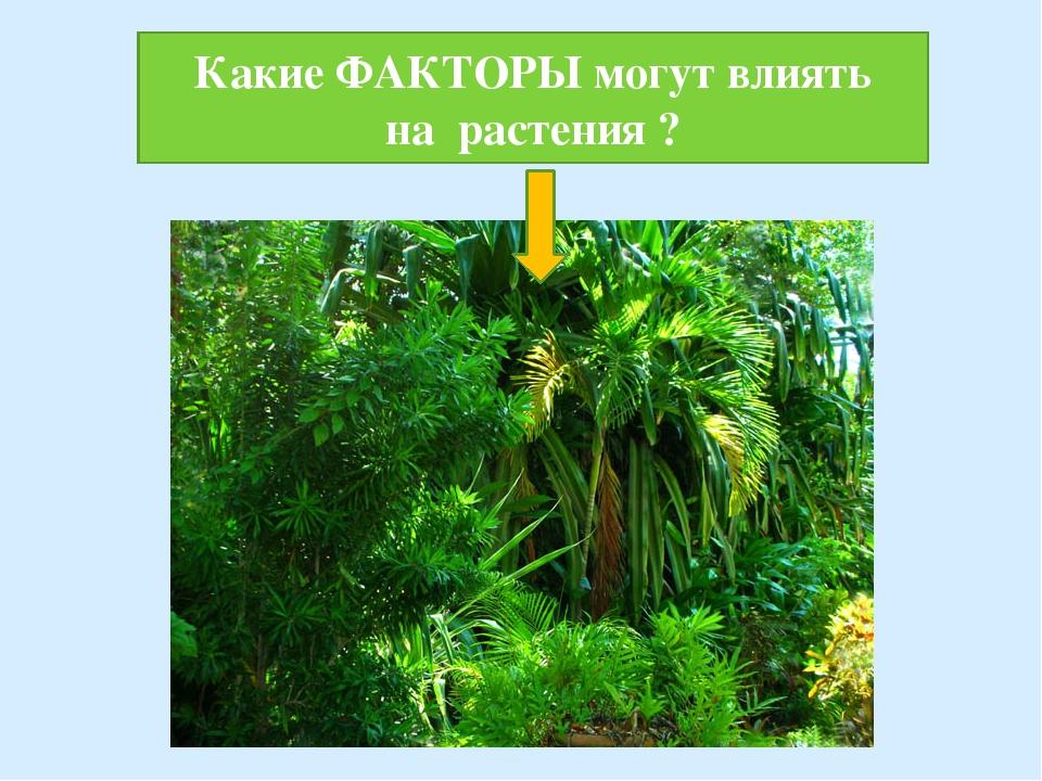 Какие ФАКТОРЫ могут влиять на растения ?