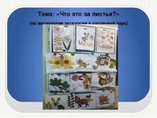 Тема: «Что это за листья?» (по материалам экскурсии в школьный парк)