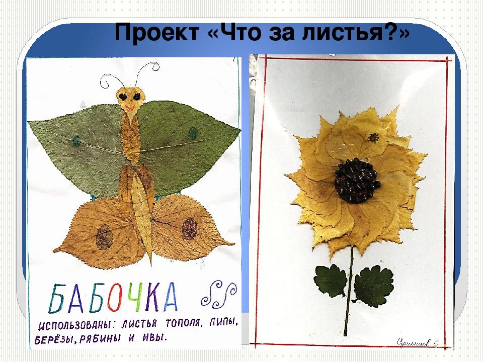 Проект «Что за листья?»