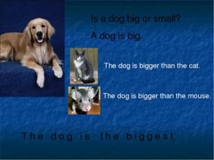 Is a dog big or small? A dog is big. T h e d o g i s t h e b i g g e s t. The