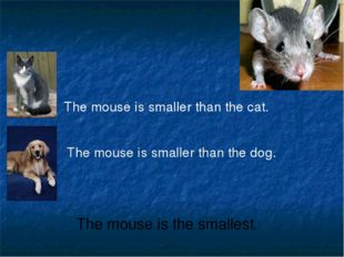 The mouse is smaller than the cat. The mouse is smaller than the dog. The mou