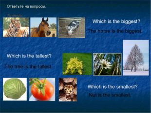 Ответьте на вопросы. Example: Which is the biggest? The horse is the biggest.