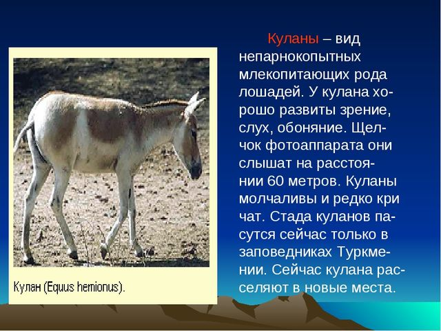 Куланы – вид непарнокопытных млекопитающих рода лошадей. У кулана хо- рошо р...