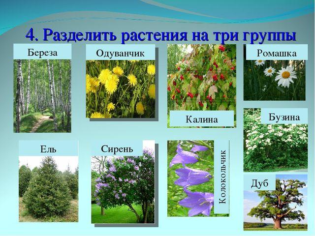 4. Разделить растения на три группы Береза Ель Бузина Одуванчик Колокольчик Р...