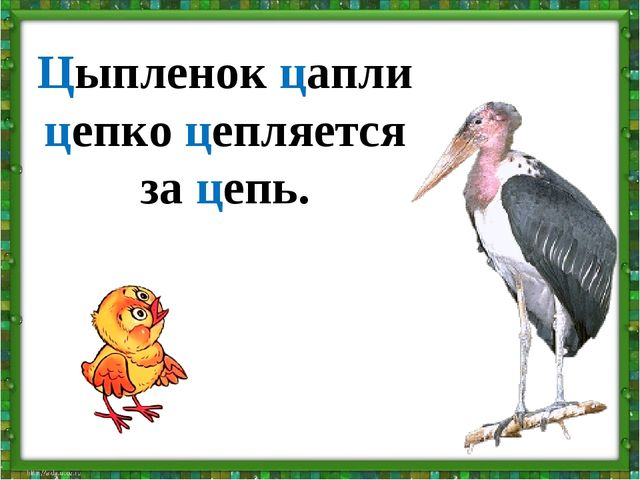 Цыпленок цапли цепко цепляется за цепь.
