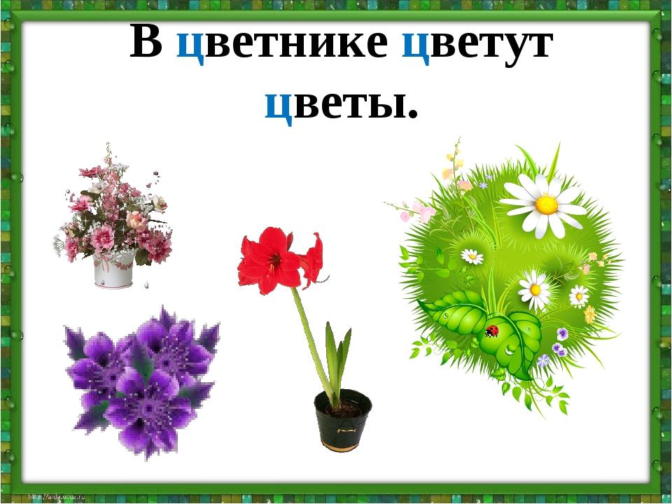 В цветнике цветут цветы.