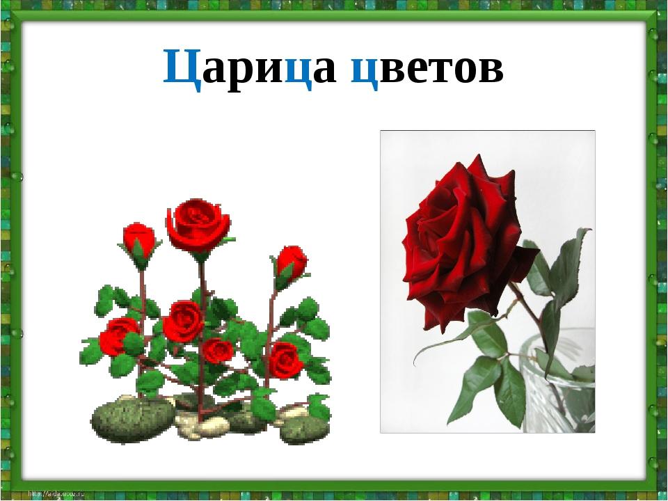 Царица цветов