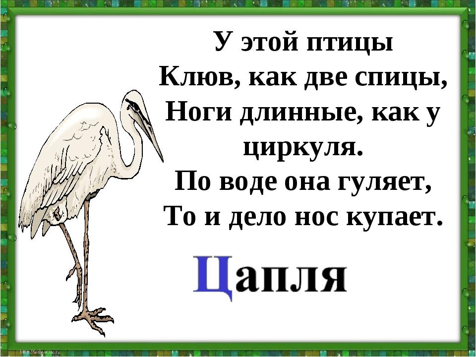 У этой птицы Клюв, как две спицы, Ноги длинные, как у циркуля. По воде она гу...