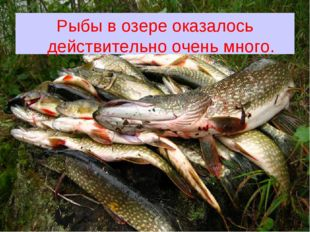 Рыбы в озере оказалось действительно очень много.